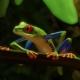 Planet Zoo: Das Südamerika-Paket ist ab sofort erhältlich